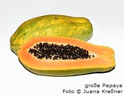 grosse_papaya_foto_juana_kressner