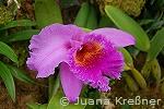 orchideen_b2_kl