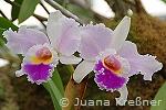 orchideen_b3_kl
