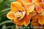 orchideen_b4_kl