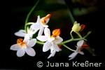 orchideen_b5_kl