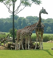 zoo_b1